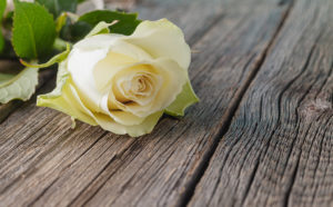 White rose on wooden table