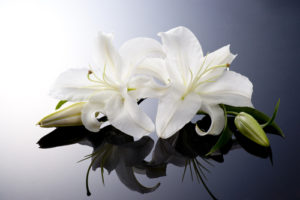 Elizabeth Chard Funeral Notice